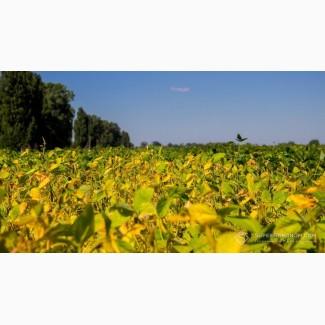 Принимаем на постоянной основе сельхозпродукцию Сою