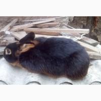 Продажа селекционных пород кролей