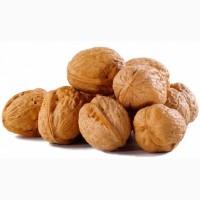 Продажа грецкого ореха оптом (кругляк)