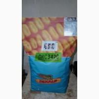 Продам посевной материал кукурузы Monsanto DKC3420, DKC6320