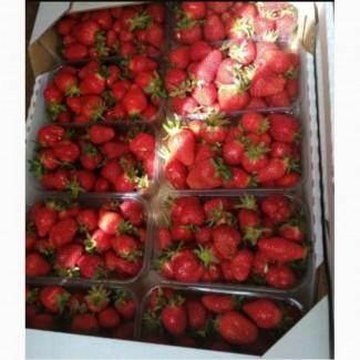 Продам клубнику сорт клери