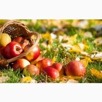 Яблоки осенние в ассортименте