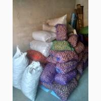 Продам грецький горіх орех