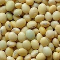 Семена сои МАКСУС под гербицид 1 репрод
