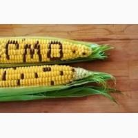 Продам СРОЧНО Семена кукурузы CORBIN FS - 899 ФАО 260 канадский трансгенный гибрид
