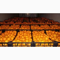 Продам мандарини
