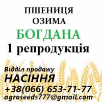 Семена озимой пшеницы Богдана - от производителя