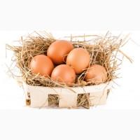 Дієтичні яйця