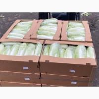 Продам СУПЕР пекинскую капусту