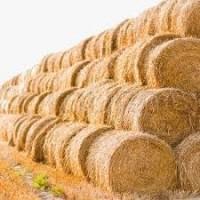 Солома пшеницы в тюках