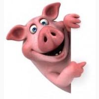 Купим дорого свиней и КРС