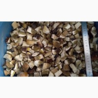 Продам гриб кубик карпацький