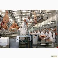 Линия по переработке мяса крупного рогатого скота