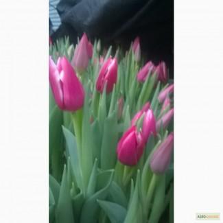Купить тюльпаны в крыму оптом доставка цветов из нижнего новгорода в бор