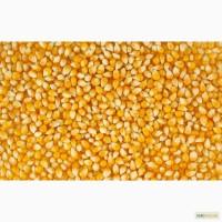 Продам насіння кукурудзи