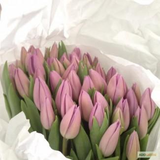 Тюльпаны оптом со склада из Голандии! Доставка по всей Украине почтой