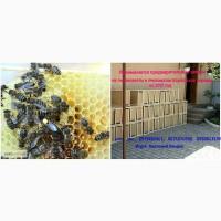 Пчеломатки породы Карпатка тип Вучковский на 2019 год