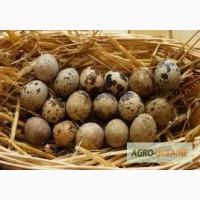 Продам яйця перепілки. Домашня ферма. Доставка по всій Україні