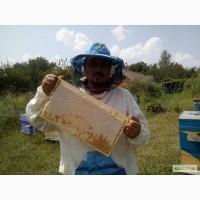 Продам Воск бджолиний натуральний, вищого гатунку (для косметології) - 7, 5 у.е. за 1кг