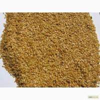 Закупаю новый урожай: горчицу белую, желтую, черную, семена льна золотистого и коричневого