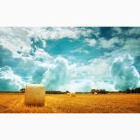 Услуги пресс-подборщика Харьков услуги по тюкованию сена соломы подбор травы с валков