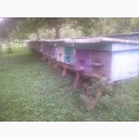 Продаю бджолосімї разом з вуликами