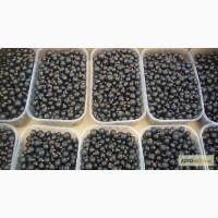Продам свежие ягоды черной смородины. Сорт Юбилейная Копаня