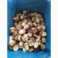 Білі морожені гриби