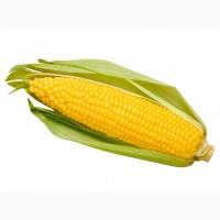 Купим кукурузу, быстрый расчет, адекватные цены