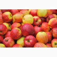 Продам яблука різних сортів: Рубінола, Флоріна, Джонаголд, Симеренко, Сніжний калв.та ін