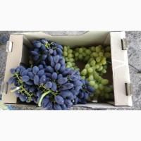 Продам Столовый виноград разных сортов