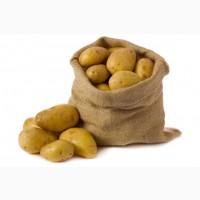Продам картоплю, опт