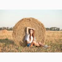 Солома пшеницы