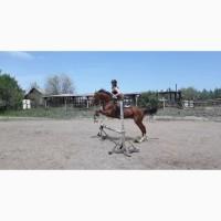 Продам коня (мерин) в спорт/хобби