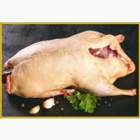 Мясо тушка мускусной утки шипуна индоутки