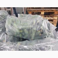 Оптовая база закупает огурец оптом. Потребность 300 тонн в месяц