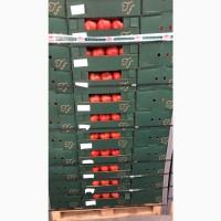 Продам помідор