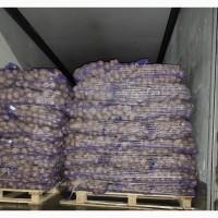 Продам картофель продовольственный 5+ из Литвы