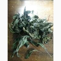 Продам топинамбур (земляная груша). Сушеный целый лист