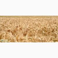 Куплю зерновые, масличные культуры