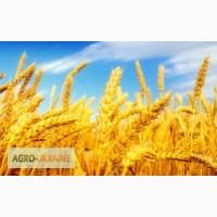 Куплю Пшеницу 2-3 кл.,фураж.Запорожская,Хер сонская области.