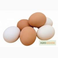 Яйцо куриное С0 С1