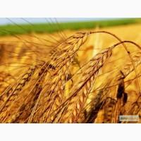 Закупка зерновых культур