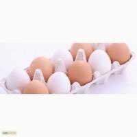 КУПЛЮ куриные, столовые яйца ОПТОМ Одесса