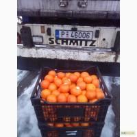 Греческий мандарин сорта КЛЕМЕНТИН уже в Украине