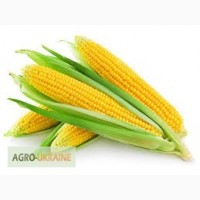 Посевной материал кукурузы Сингента Пионер Майсадур Лимагрейн Агроселект