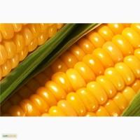 Дорого куплю по Луганской области кукурузу