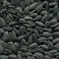 Продам калиброванную семечку подсолнуха Продам каліброване насіння соняшника