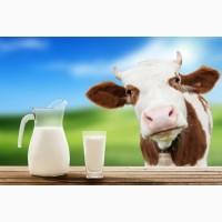 Куплю коровье молоко оптом от 50 литров