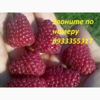Куплю опт ягоду малину и тд